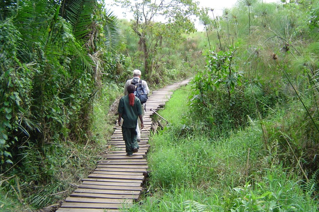Chimpanzee Tracking & Bigodi Swamp Tour