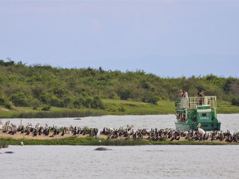Transfer to Queen Elizabeth National Park and afternoon launch cruise