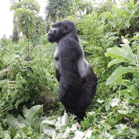 4 Days 3 nights Queen Elizabeth and Bwindi Impenetrable Forest National Parks